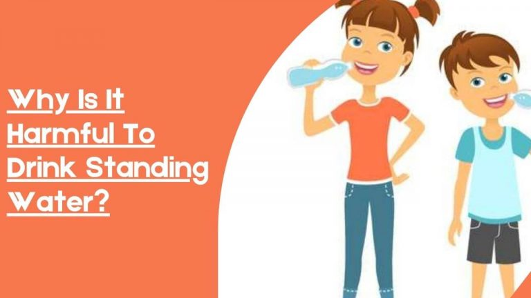Why Is It Harmful To Drink Standing Water?